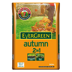 EvergreenAutumn